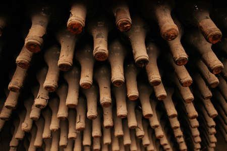 A lot of old wine bottles covered with dust. Resting wine bottles stacked on wooden racks in cellar Stock Photo