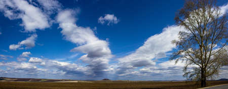 panorama of a tree in a field and beautiful clouds Standard-Bild
