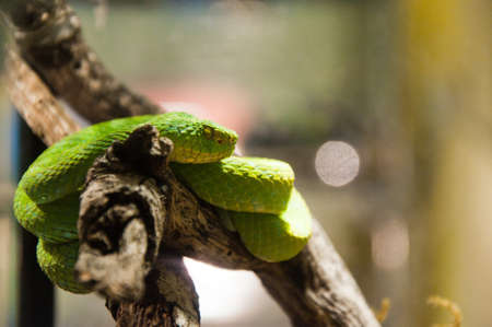 Green snake in rain forest at Zoo photo