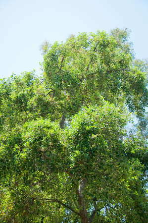 Tree in park photo