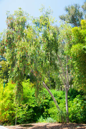 Tree in park Stock Photo - 14300365