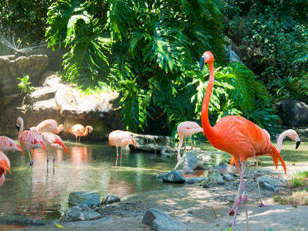 Some flamingos in the water at Zoo of Los Angeles. California