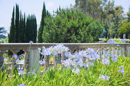 Flowerbeds in one of the park of Los Angeles photo
