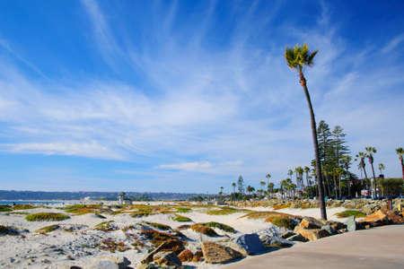 three palm trees: San Diego California Stock Photo