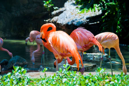 Some flamingos in the water Stock Photo
