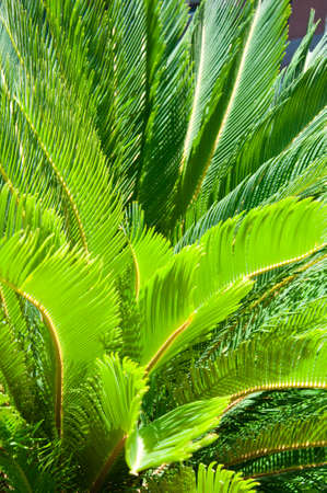huge tree: palm tree Stock Photo
