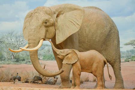 Elephant feeds on the plains of the Masai Mara