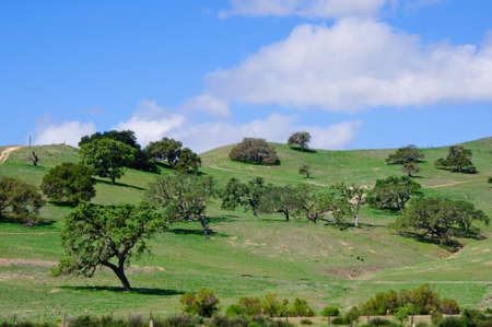 View Of Hillside in a Northern California. The sun painted the round shaped trees with amazing beautiful lighted edges in this green landscape.