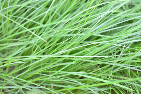 greenness: Green grass
