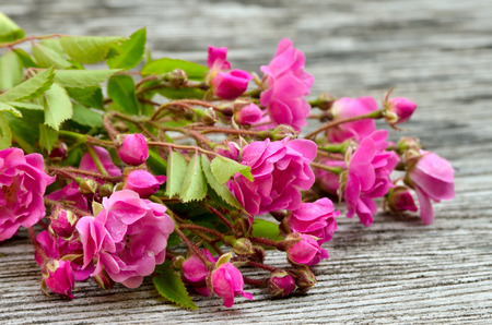 rosales: Bunch of pink roses on a wooden background