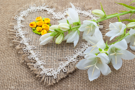 flowering houseplants white flowers campanula lie on the heart of coarse cloth stock photo with white flowering house plants