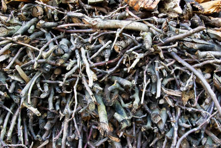 brushwood: Dry brushwood and wood stacked in a pile of