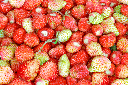 'wild strawberry: Red and green berries of wild strawberry.