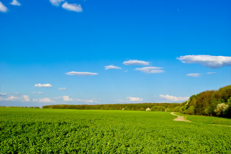 breeding ground: Green field,road,forest,on the background of the blue sky with clouds