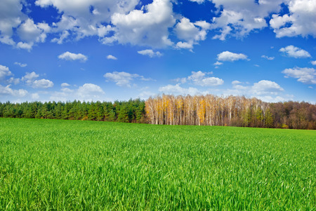 palate: Green field near the forest on  background of blue sky.