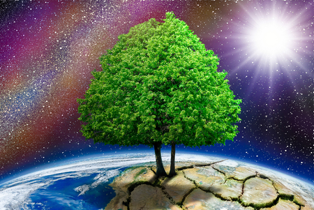 friendless: Lonely tree on the planet cracked in the background space.