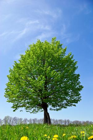 맑은 파란 하늘 배경에 필드에 외로운 나무
