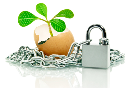 findings: Plant in the egg shell apart, wound chain and padlock