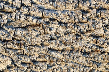scabrous: The texture of rough, old, dry alder bark