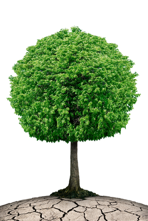 friendless: Lonely tree on the planet cracked isolated on a white background. Stock Photo