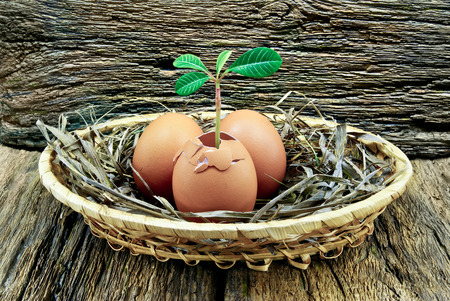 Eggs,plant inside the egg,placed in a basket on the wooden background. Stock Photo