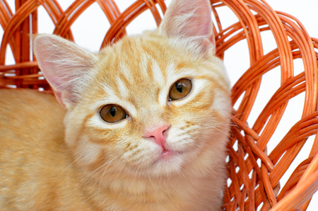 nursling: Young yellow cat sitting in a wicker basket Stock Photo