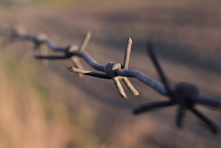 despotism: The long, rusty barbed wire with sharp thorns