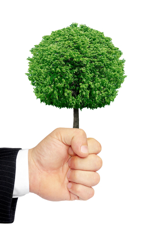 friendless: Hand holding a tree isolated on a white background. Stock Photo