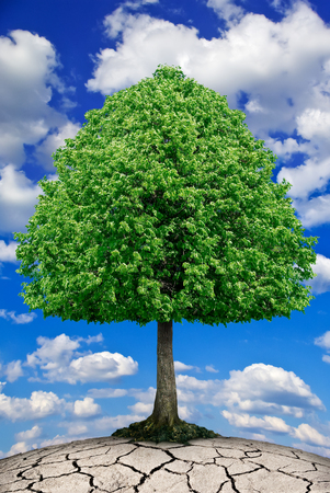 friendless: The tree grows on dry ground against the sky.