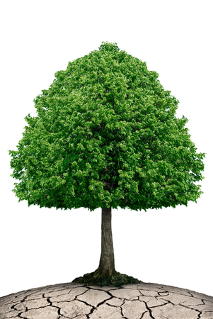 friendless: The tree grows on dry ground isolated on white. Stock Photo