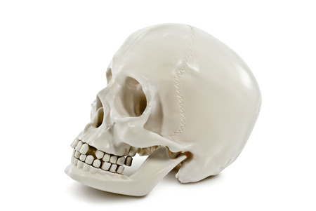 The human skull isolated on white background. Stock Photo
