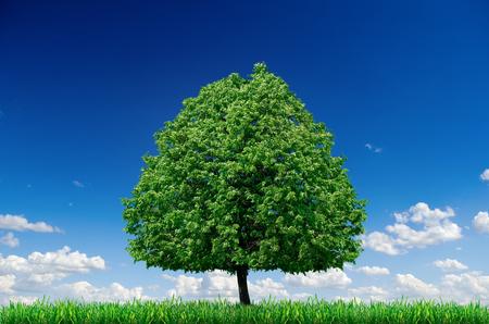 Lonely tree in a field against a blue sky. Landscape, desktop wallpaper. 스톡 콘텐츠