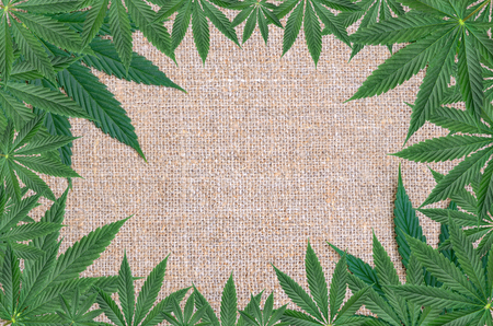 Cannabis leaves on the background of coarse hemp fabric