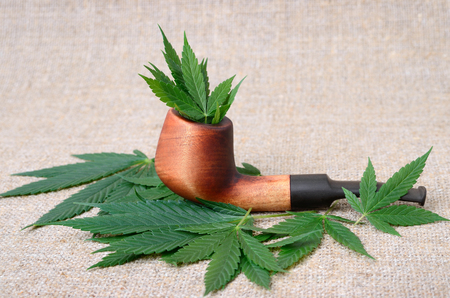Smoking pipe and cannabis leaves. Smoking mix of marijuana, medicine and recreational drug.