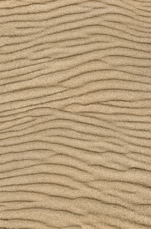Sand ripple texture. Sandy background. Sand close-up.