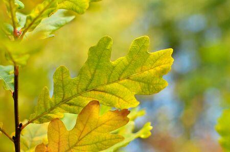 Gelbe und rote Blätter an Bäumen im Herbstpark. Abstraktion von bunten Herbstblättern. Standard-Bild