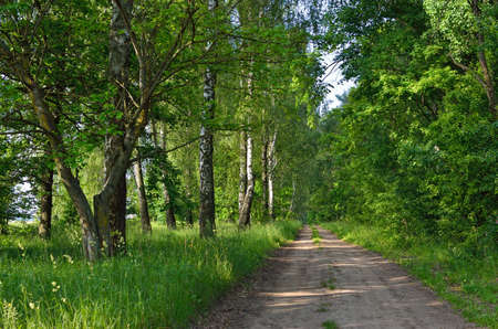 Trail among tall, green trees in a forest