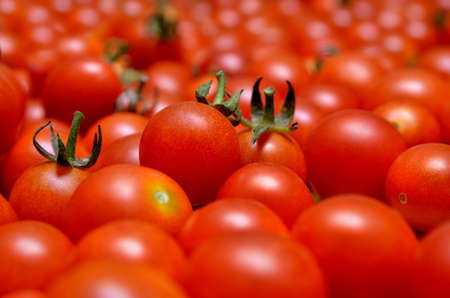 A lot of red, ripe tomato close-up 免版税图像 - 157381782