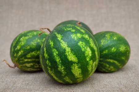 Ripe, green watermelons on a coarse burlap 免版税图像