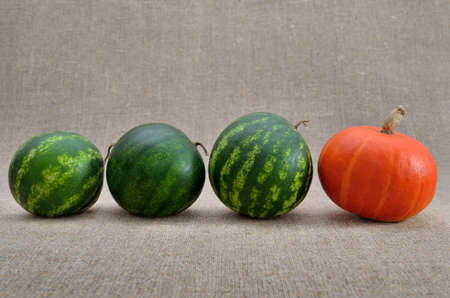 Ripe watermelons and pumpkin on a coarse burlap 免版税图像