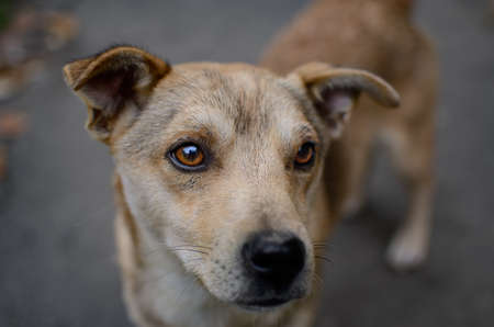 A stray dog on the street looks with sad eyes 免版税图像 - 159932601