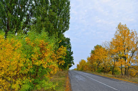 Asphalt road against the background of autumn trees 免版税图像