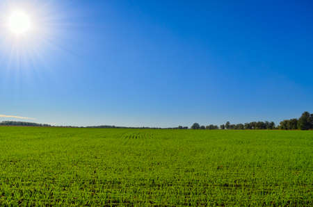 Green field against blue sky and bright sun