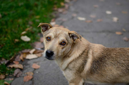 A stray dog on the street looks with sad eyes