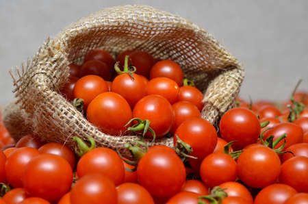 Ripe cherry tomatoes in a sack of coarse burlap