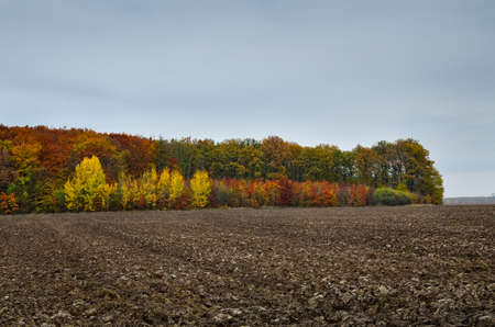 Plowed field and bright trees in autumn forest 免版税图像 - 161756841