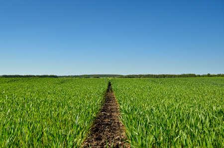 Green field on the background of blue sky 免版税图像