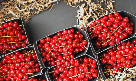 Red delicious currants packed in small boxes for fruit market. Stock Photo