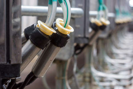 cleaned milking equipment waiting for the arrival of cows. Stock Photo