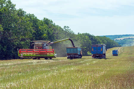 process of  canola harvesting by harvesters. plants in reapers. truck unloading Publikacyjne